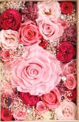 枯れない魔法のバラ オールドローズアモローサカブキホットピンク