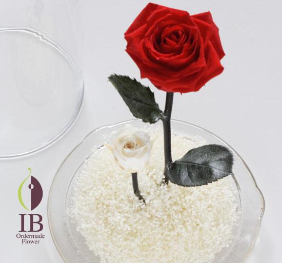 ガラスドームのお花 赤いバラ