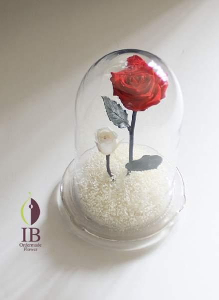 ガラスドームのお花 プリザードバラチェリーレッド