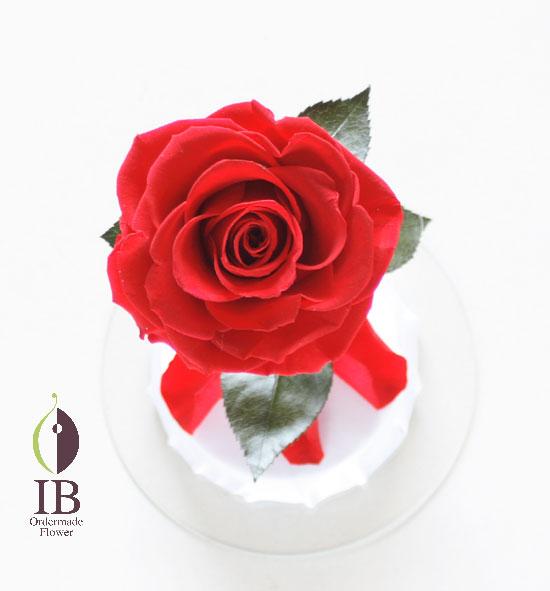 プリザードフラワー 一輪の赤い薔薇