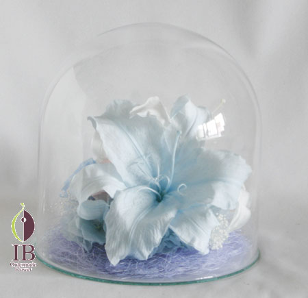 プリザーブドフラワー ドームのお花 カサブランカ