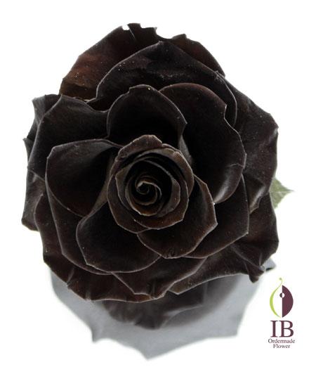 プリザードフラワー オーダーメイド 一輪の黒いバラ